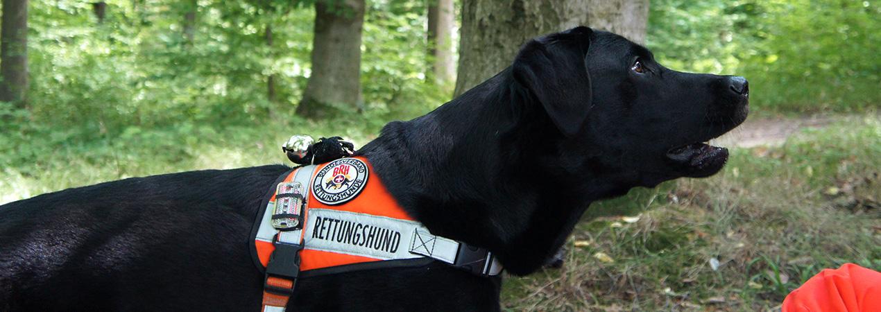 Rettungshunde_Fildern_Slider1