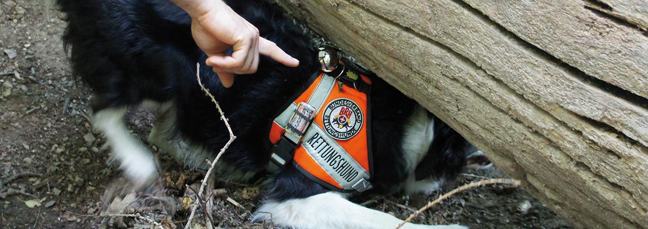 Rettungshunde_Fildern_Slider6