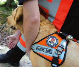 Rettungshund wird zur Suche geschickt | Rettungshunde