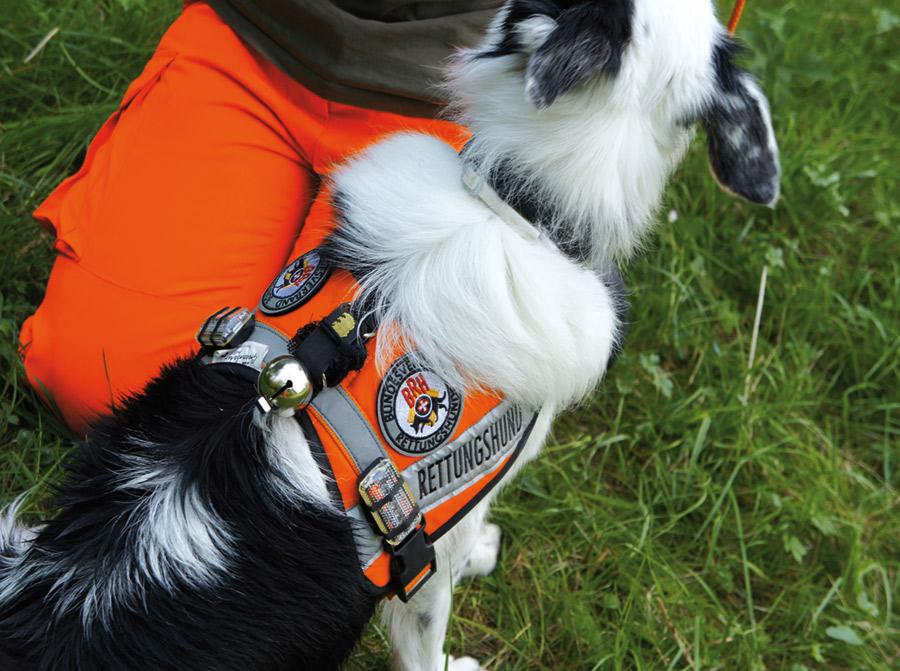 Der Verein Rettungs- und Therapiehunde Fildern bildet Rettungshunde und Besuchshunde aus
