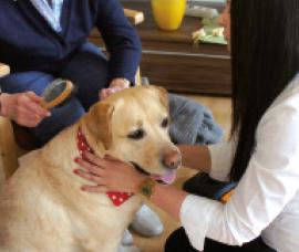 Besuchshund Laika bei einem Einsatz im Pflegeheim | Besuchshunde
