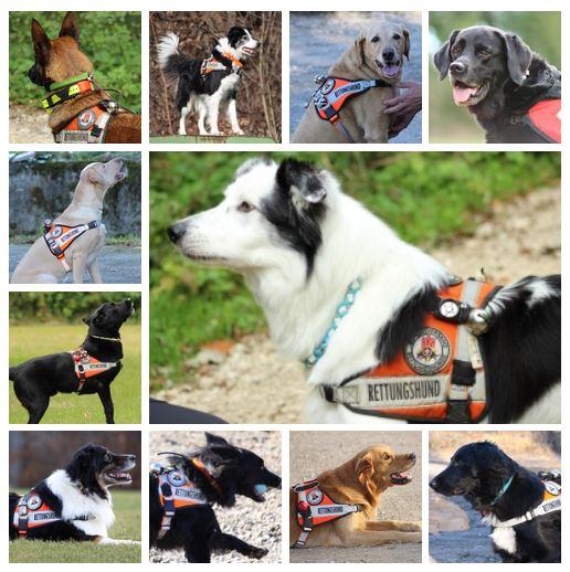 Internationaler Tag des Rettungshundes